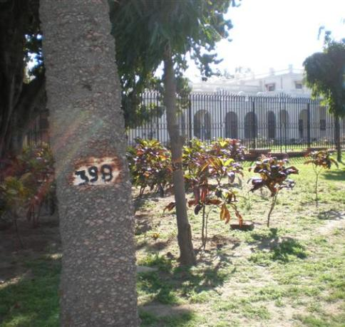 tree cut in vicinity of VC'soffice