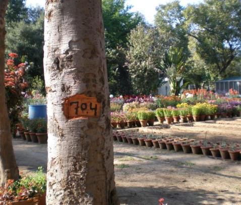tree cut forlabelling