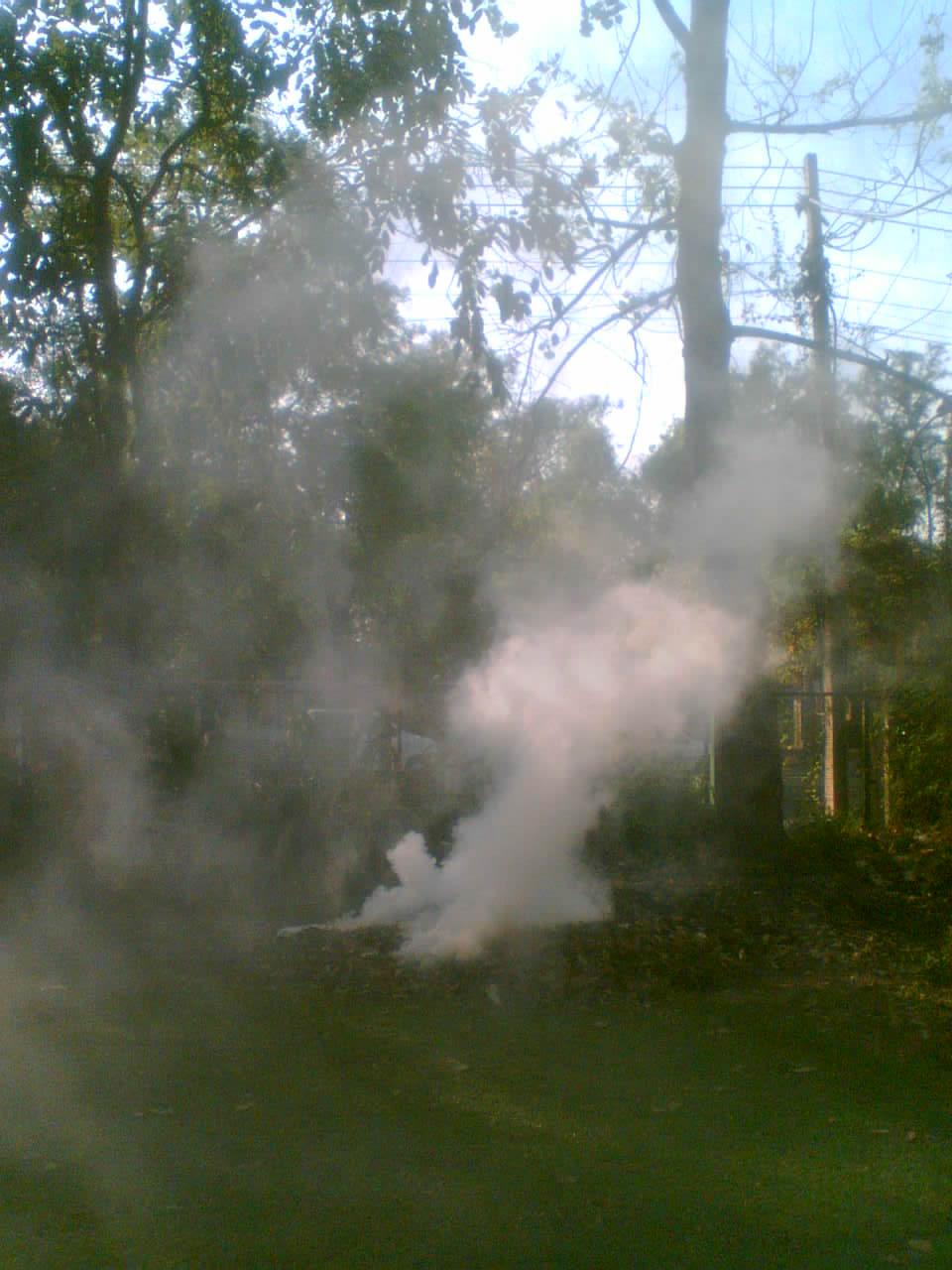 evening image of burning leaves in delhiuniversity