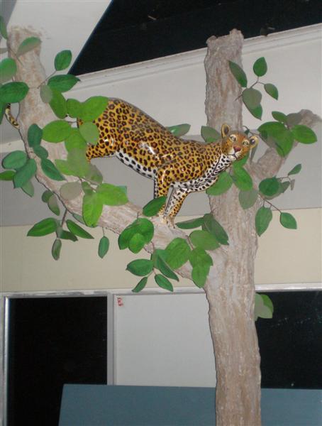 Leopard in DelhiCity