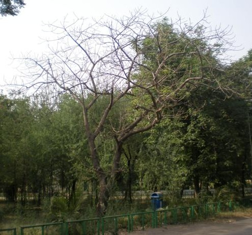 a tree gone, on the deathbed
