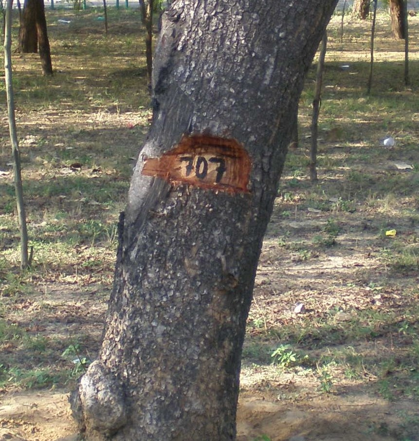 tree cut delhiuniversity