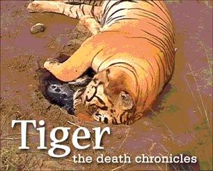dead tigervisual