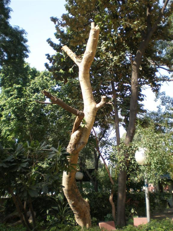 tree choppedoff