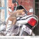 Monkey at the UniversityHT