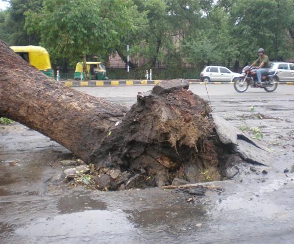 Tree felled at Gol Dak Khana